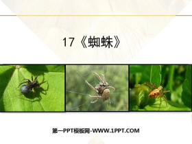 《蜘蛛》PPT下载