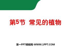 《常见的动物》PPTtt娱乐官网平台