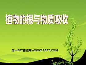 《植物的根与物质吸收》PPT课件
