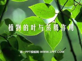 《植物的叶与蒸腾作用》PPT