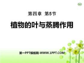 《植物的叶与蒸腾作用》PPT课件