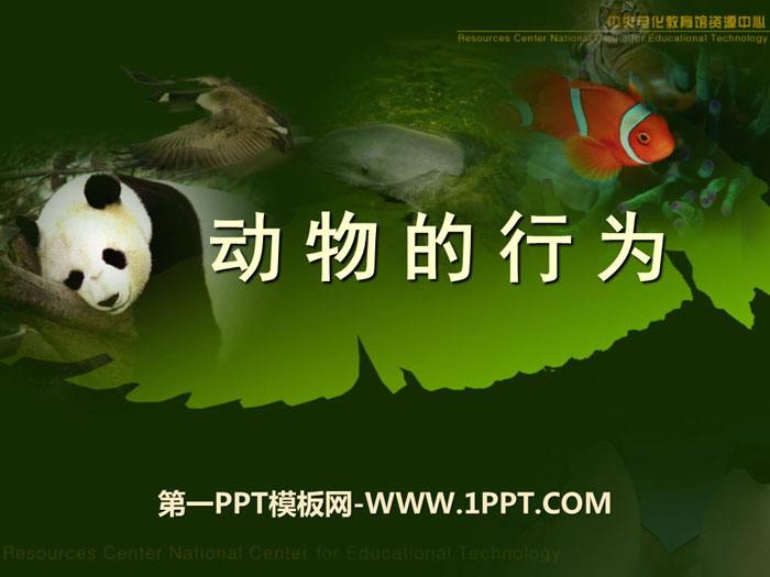 动物的行为 PPT