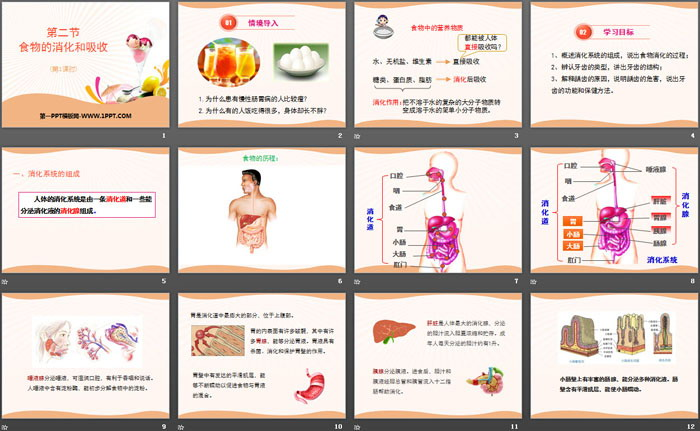 《食物的消化与吸收》PPT
