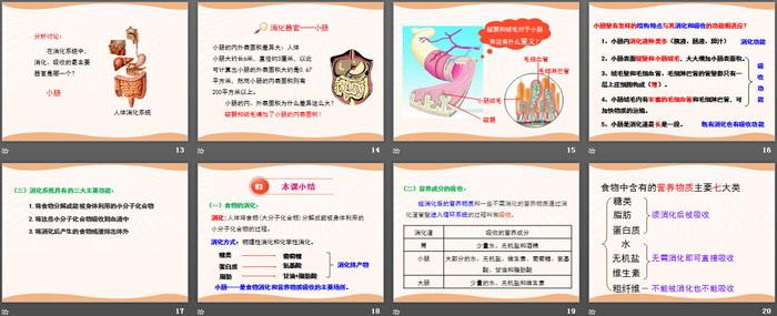 《食物的消化与吸收》PPT(第二课时)