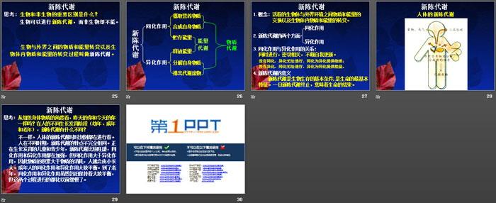 《体内物质的动态平衡》PPT课件