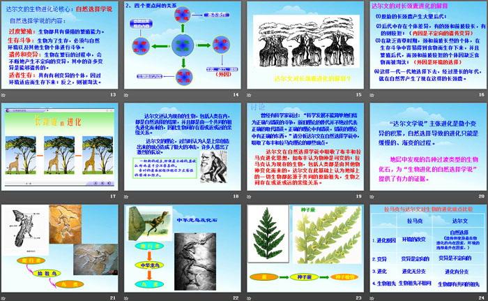 《生物的进化》PPT免费教学课件