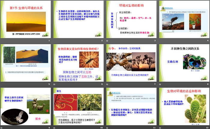《生物与环境的关系》PPT课件tt娱乐官网平台