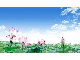 鲜艳荷花莲花PPT背景图片