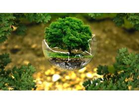 绿树PPT背景图片