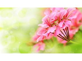 清新花朵PPT背景图片