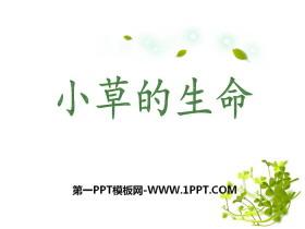 《小草的生命》PPT