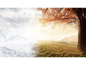 唯美树木草地幻灯片背景图片