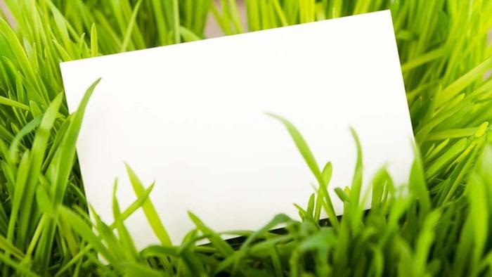 绿色植物草地白色卡片PPT背景图片