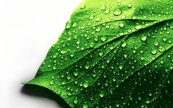 绿色露珠叶子PPT背景图片