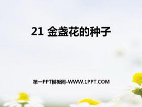 《金盏花的种子》PPT