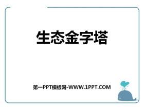 《生态金字塔》PPT课件下载