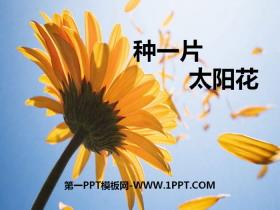 《种一片太阳花》PPT