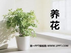 《养花》PPT