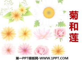 《菊和莲》PPT