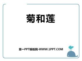 《菊和莲》PPT课件