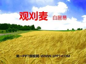 《观刈麦》PPT