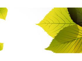 精致绿色叶子PPT背景图片
