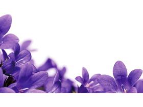 紫色小花PPT背景�D片