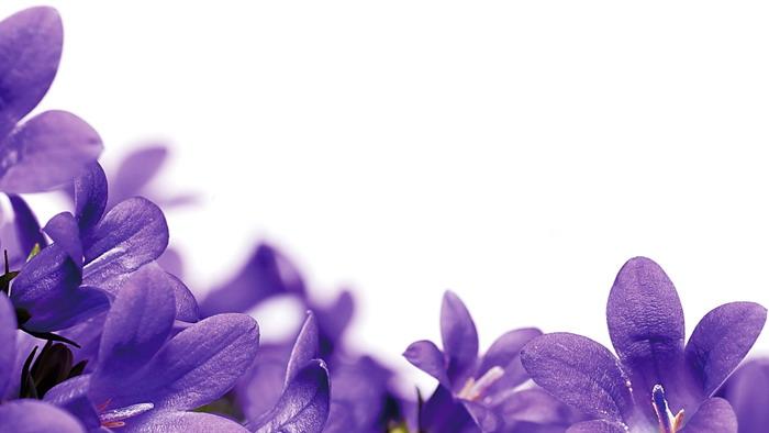 紫色小花PPT背景图片