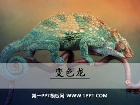 《变色龙》PPT免费课件下载