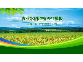 �G色稻田背景的�r�IPPT模板