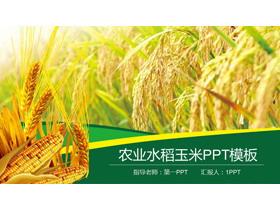 水稻小��玉米背景的�r�a品PPT模板