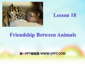 《Friendship Between Animals》Animals Are Our Friends PPT
