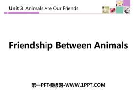 《Friendship Between Animals》Animals Are Our Friends PPT教学课件