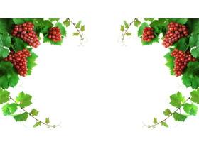 三张精美葡萄PPT背景图片