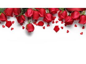 五张精致玫瑰花PPT背景图片