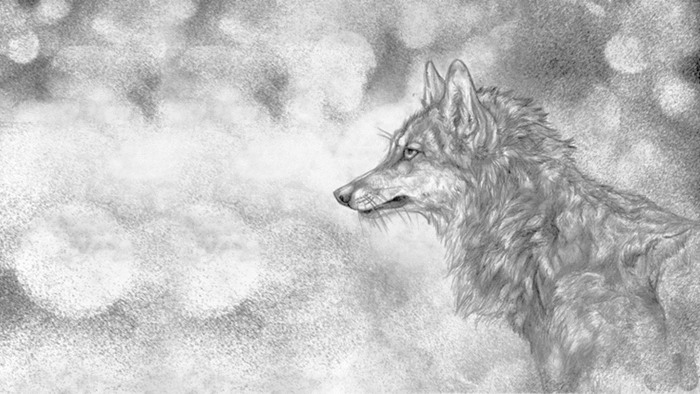 素描梅花图片_四张黑白素描绘制的狼PPT背景图片 - 第一PPT