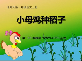 《小母鸡种稻子》PPT