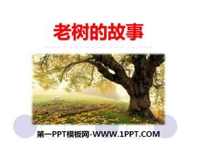 《老树的故事》PPT教学课件