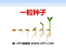 《一粒种子》PPT下载
