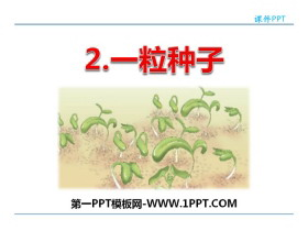 《一粒种子》PPT教学课件