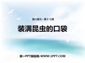 《装满昆虫的口袋》PPTtt娱乐官网平台