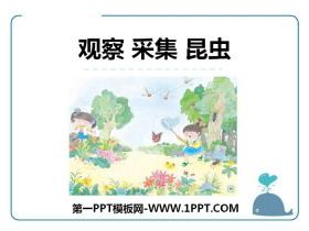 《观察 采集 昆虫》PPT