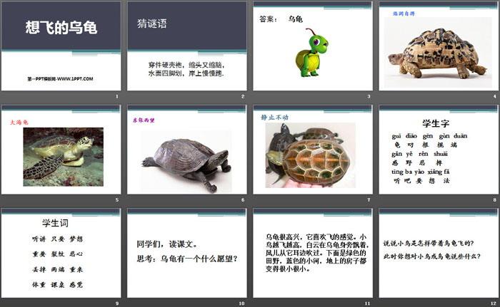 《想飞的乌龟》PPT