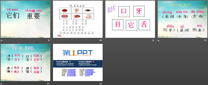 《保护器官》PPT教学课件