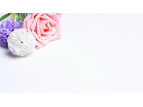 彩色月季花幻灯片背景图片