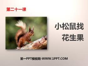 《小松鼠找花生果》PPT