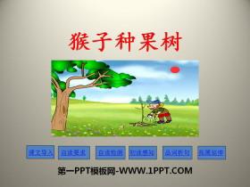 《猴子种果树》PPT