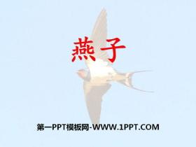 《燕子》PPT教学课件