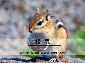 《松鼠》PPT教学课件
