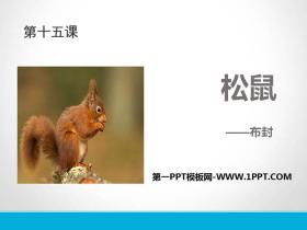 《松鼠》PPT免费课件